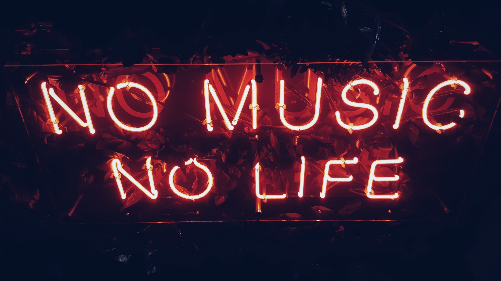 """NO MUSIC NO LIFE"" scrawled in an erratic neon glow against a dark background. The words slant against a slight reflection."