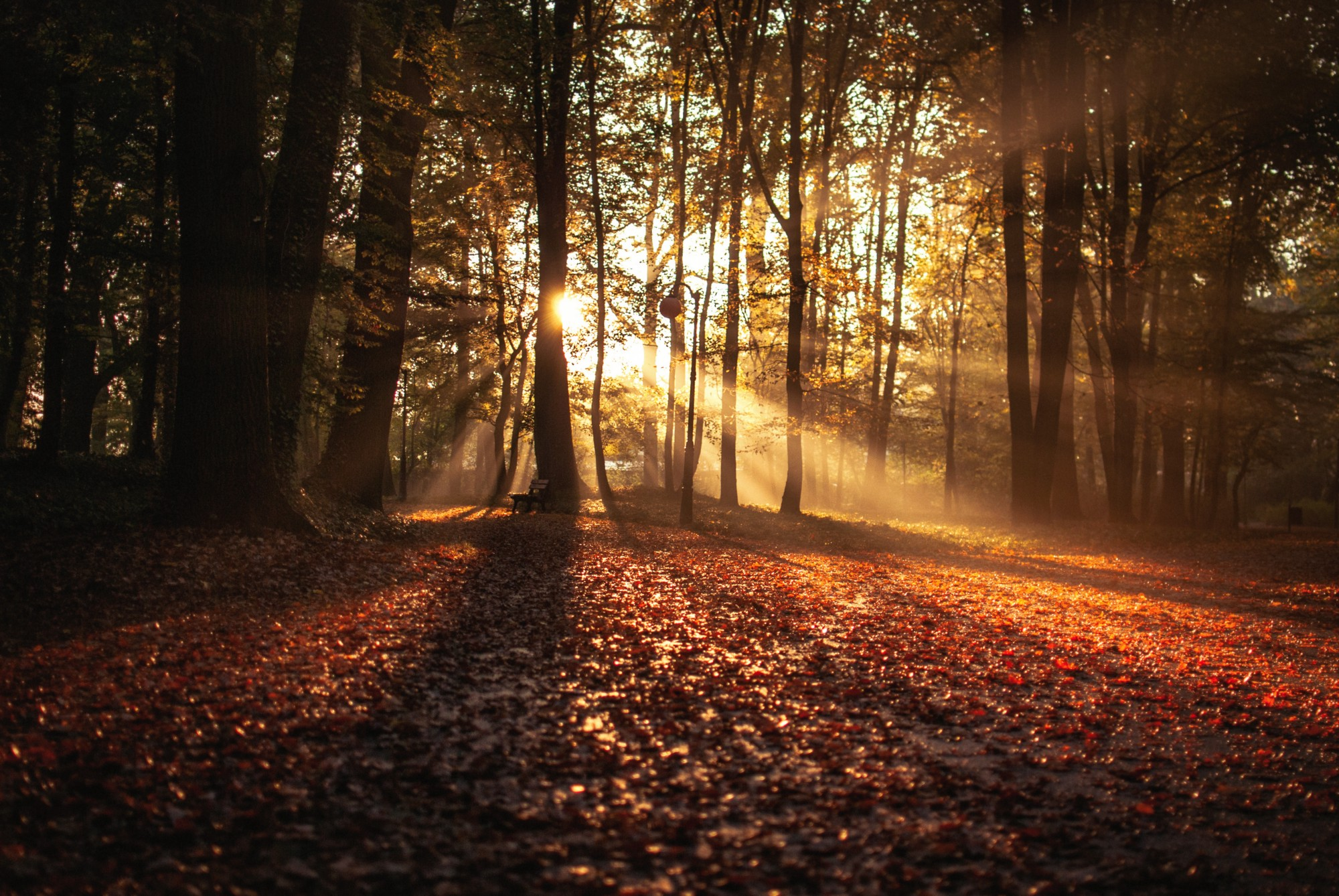 Sun rays through the woods in fall