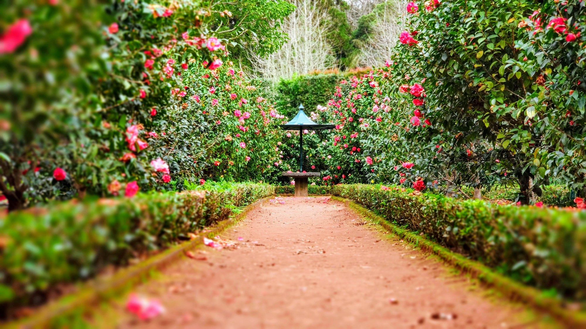 Beautiful and majestic lush green garden with a wide orange red path with vines and matching flowers on each side with a open brown gate at the end.