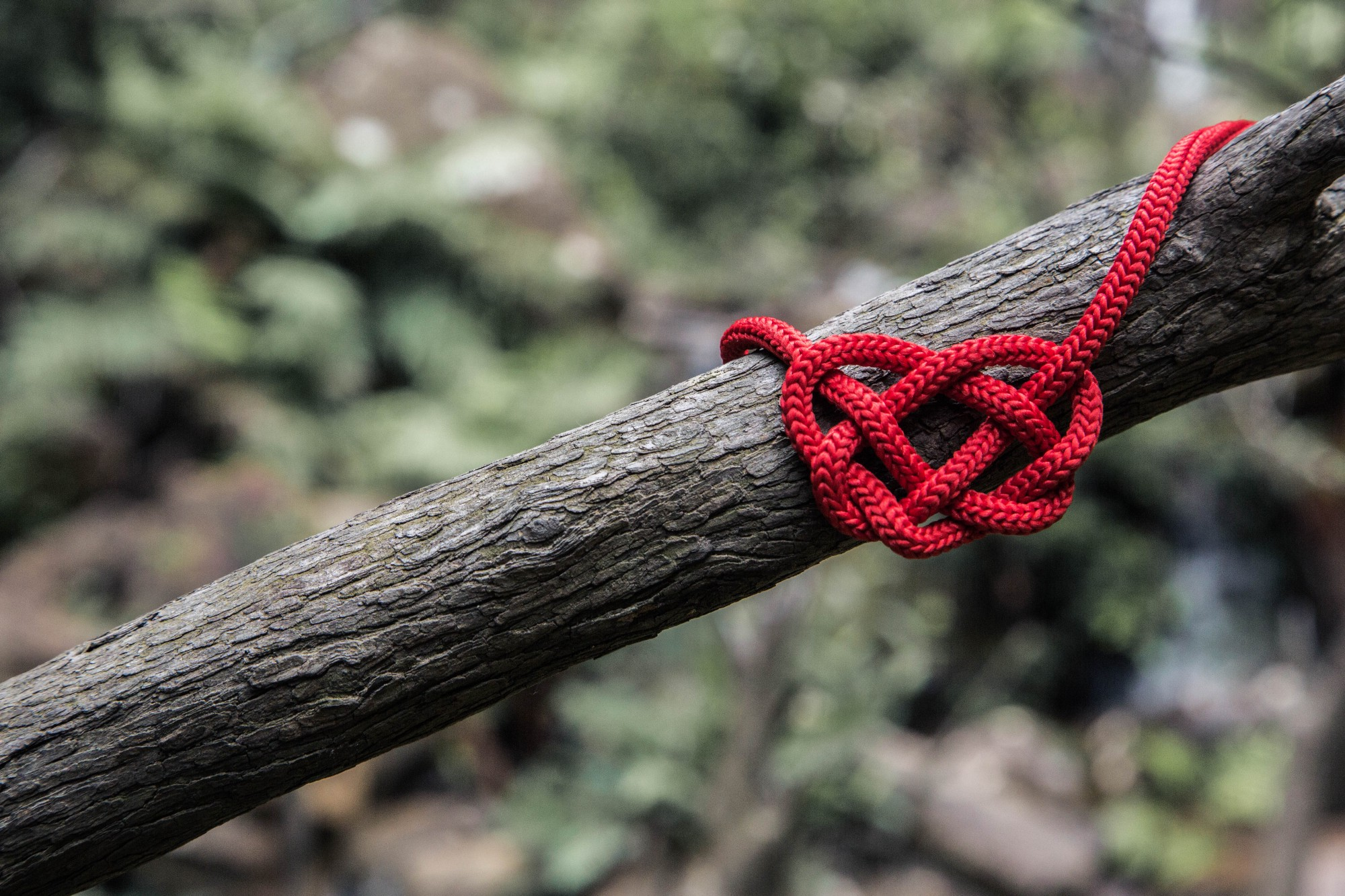 A red rope knotted around a tree branch into a heart shape
