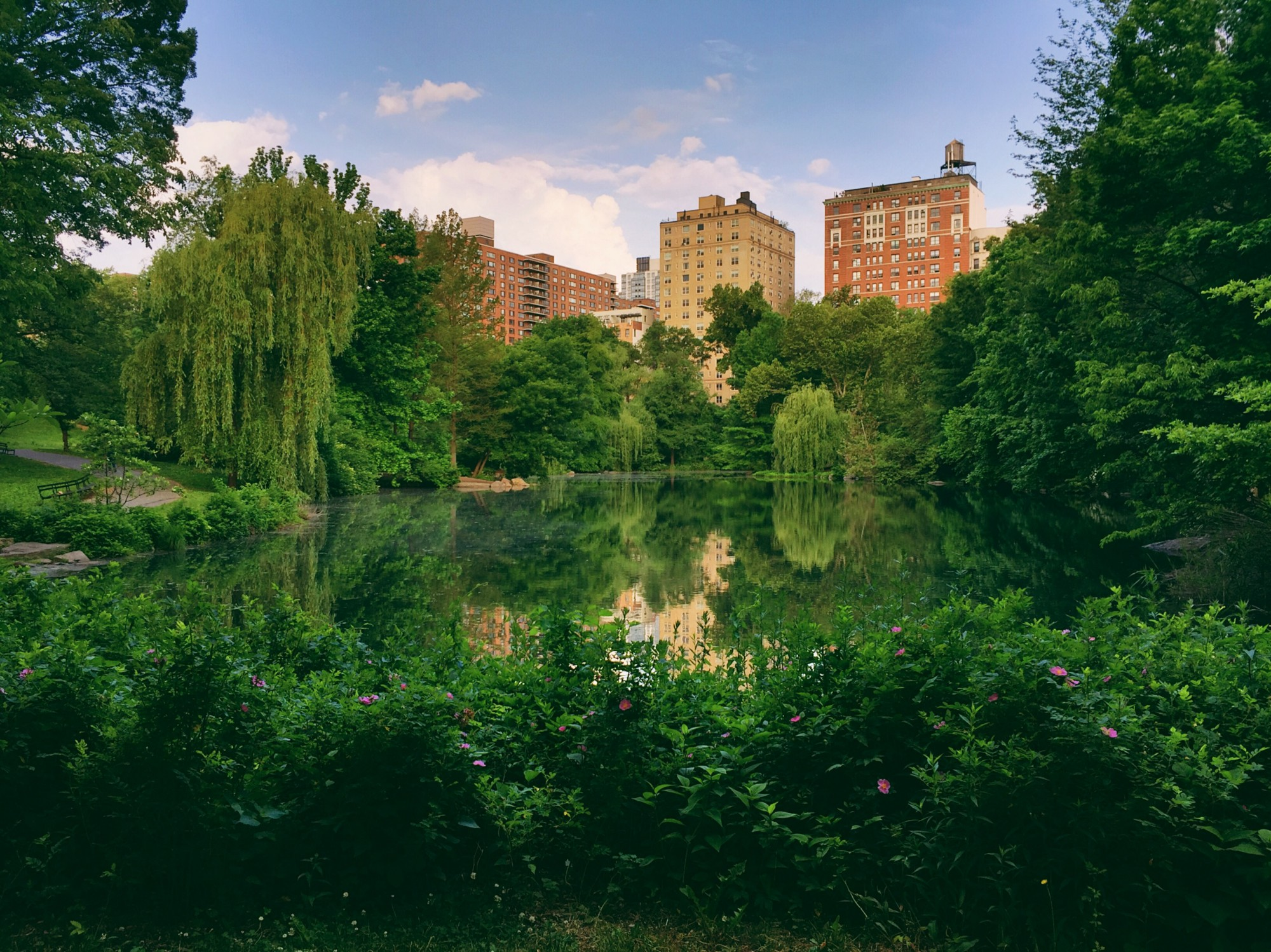 A view of a lake in Central Park, with apartment buildings visible in the background.