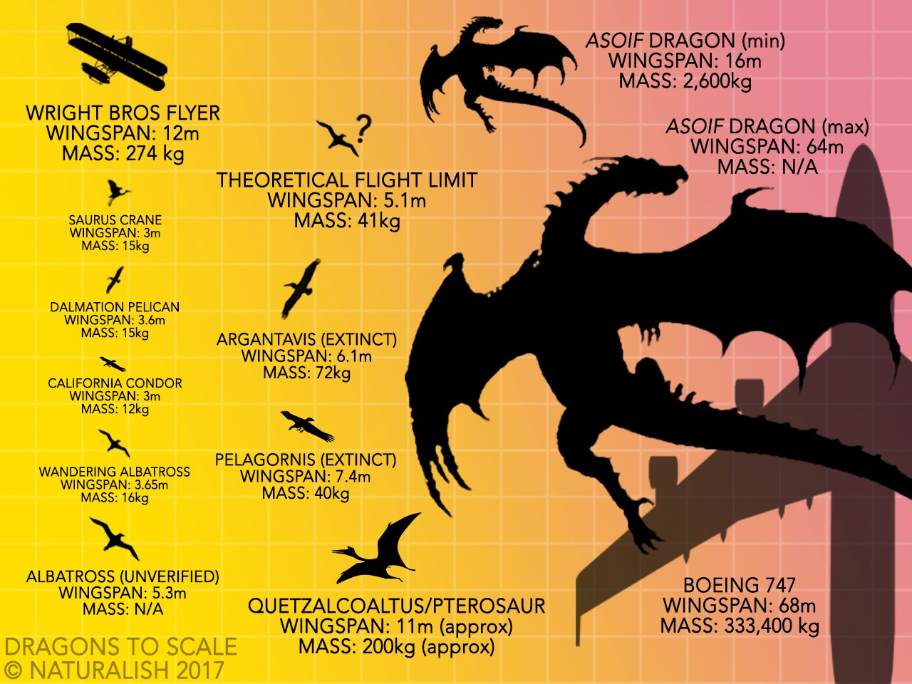 How Dragons Fly: When Biology Trumps Physics - Applaudience - Medium
