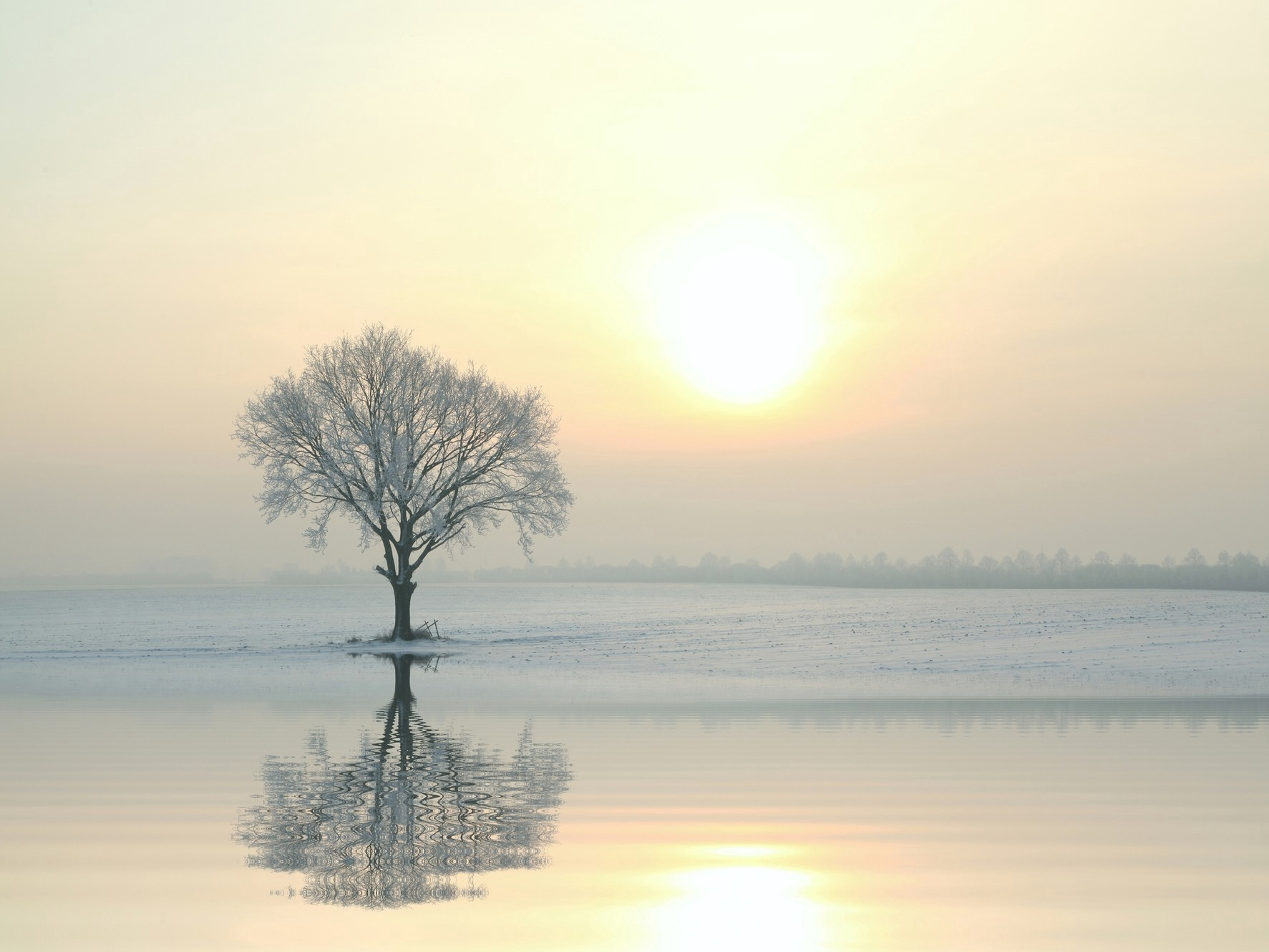 Tree in water with sun behind it