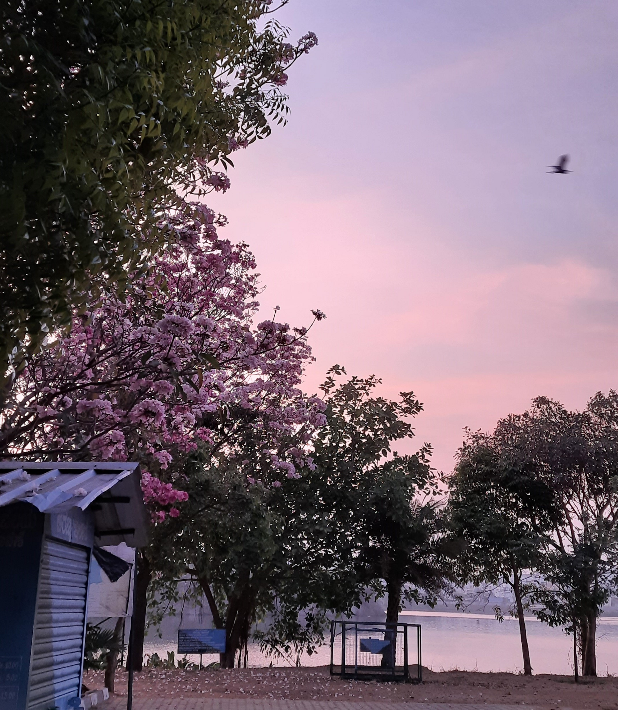 A photo of a tree blooming with flowers during sunrise