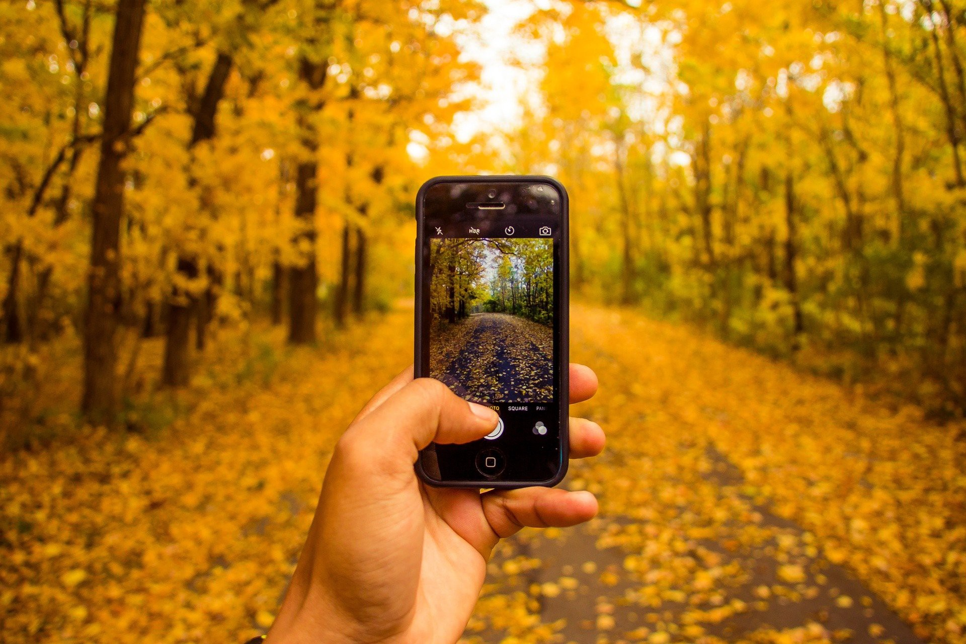 A person walking through a forest of golden leaves while taking photos with a cell phone.