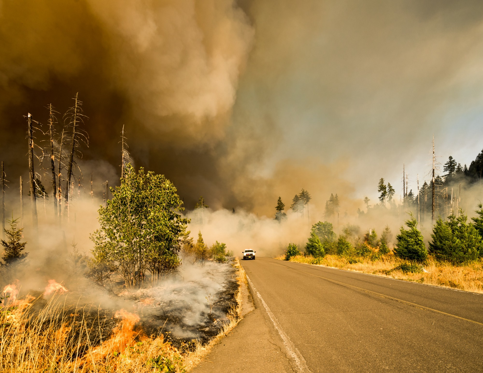 A white car is driving down a road as grey smoke fills the sky while fires burn the forest on the side of the road.