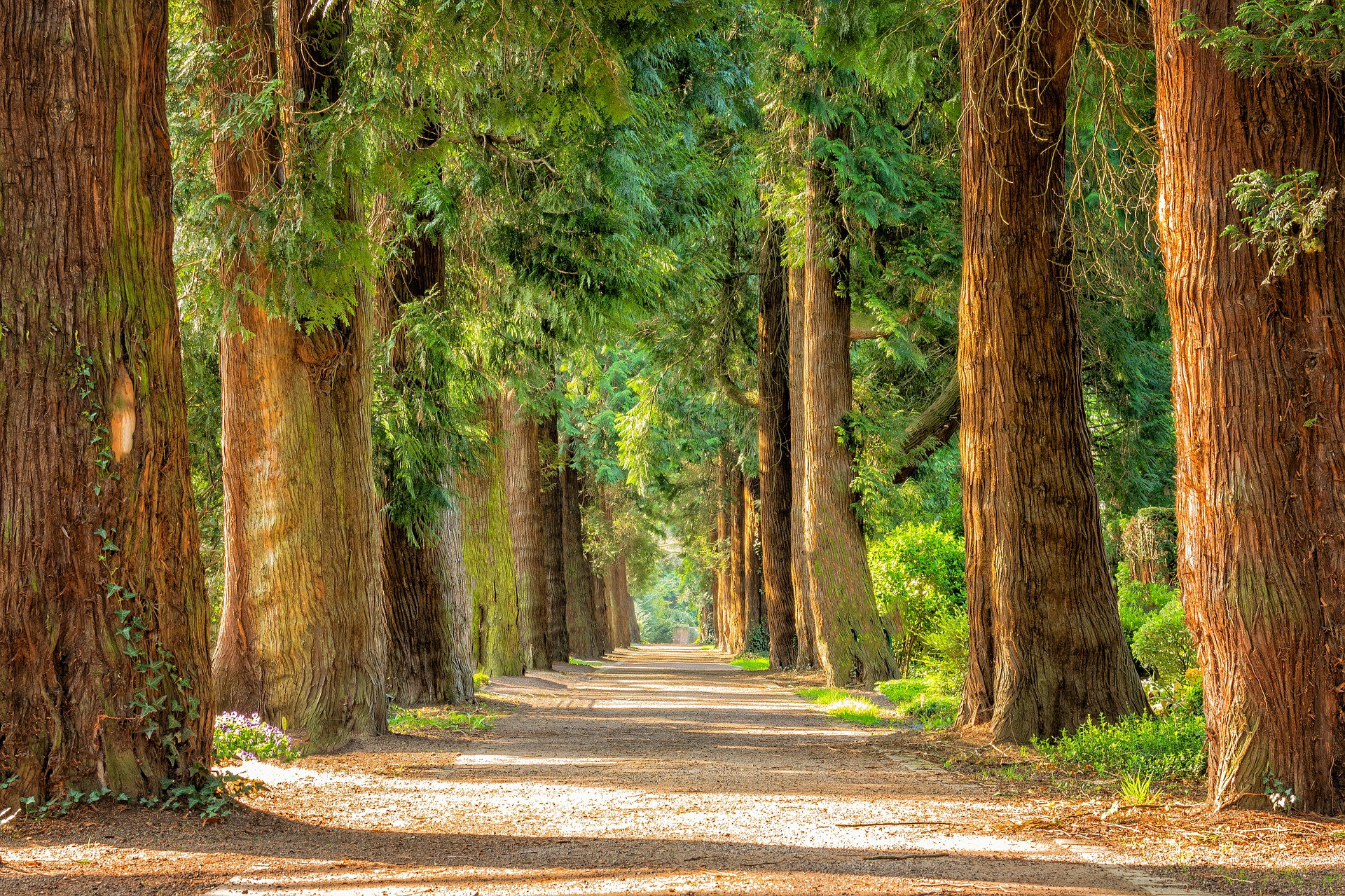 a road amidst a forestry of trees