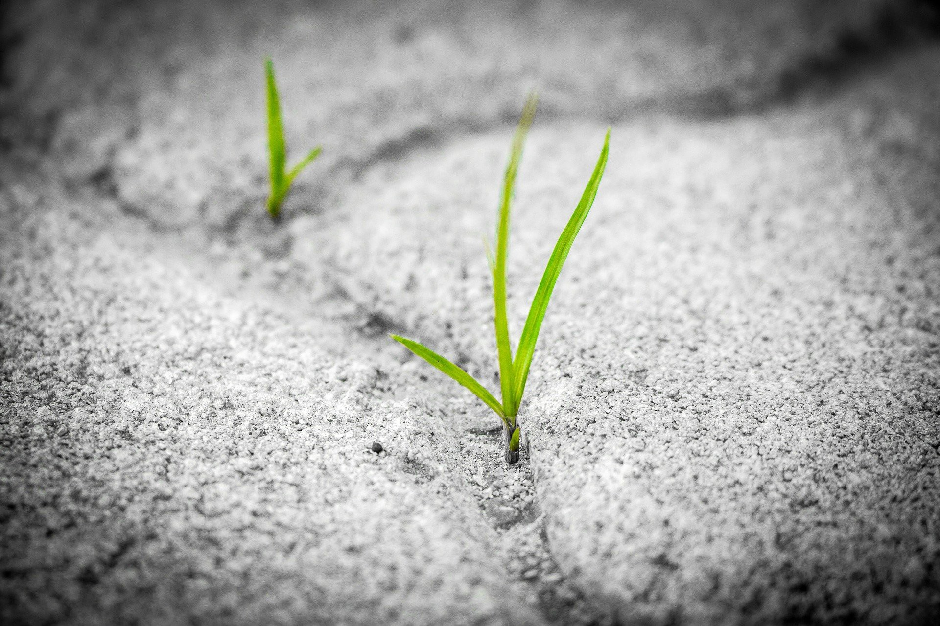 A small, green plant growing up through cracks in a concrete sidewalk.