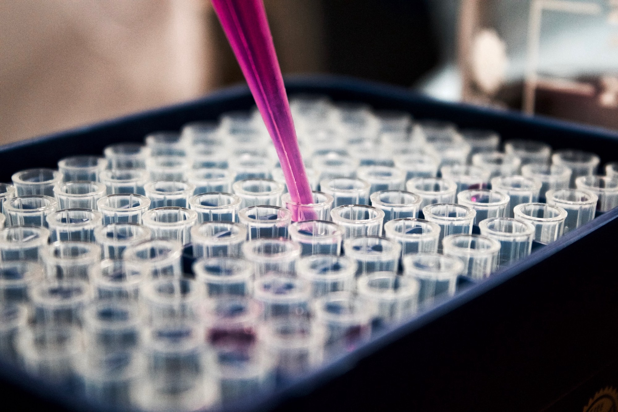 A purple pipette drops liquid into many small test tubes in what seems like a vaccine laboratory.