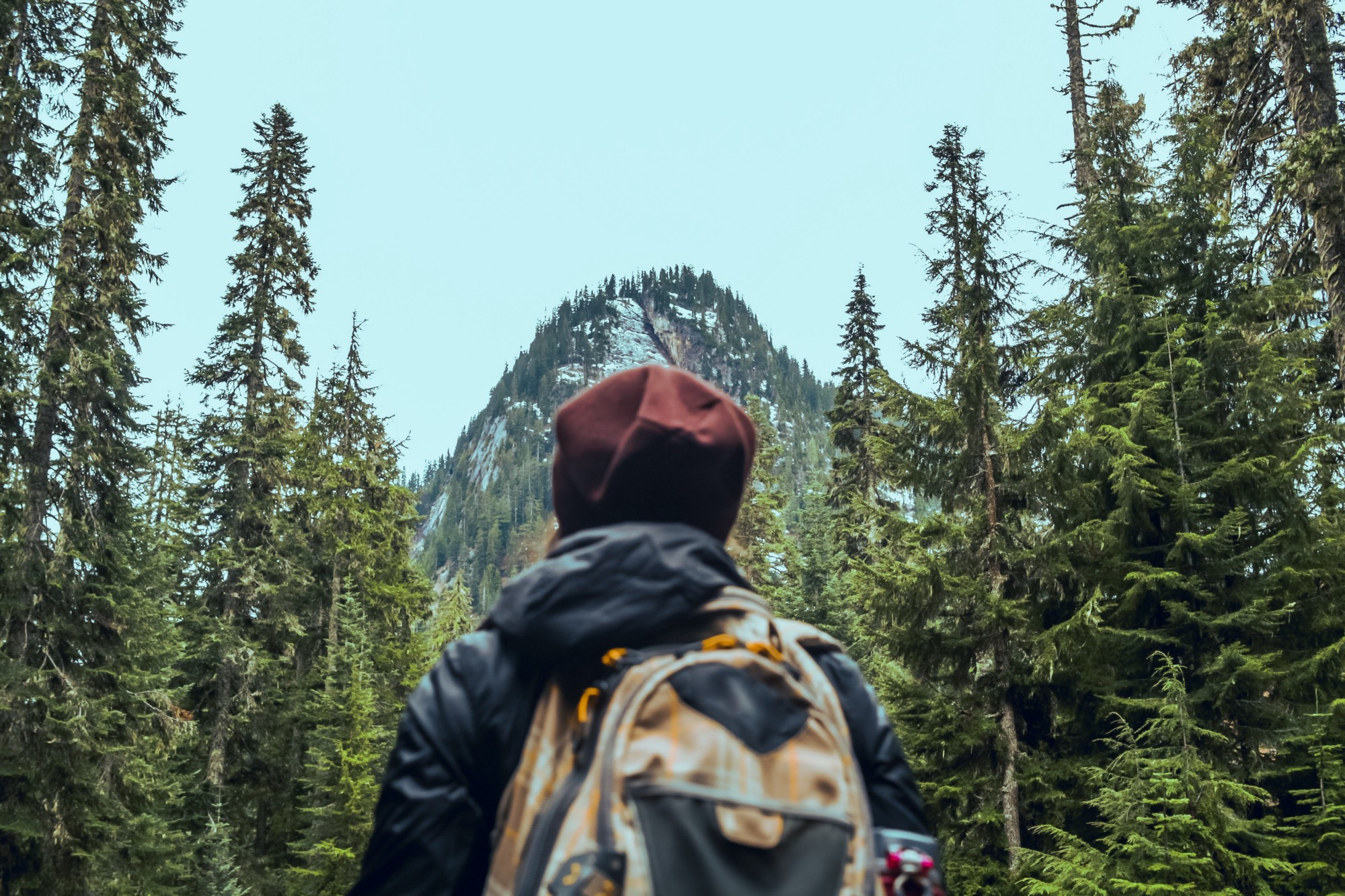 Back of female hiker between tall pine trees, looking at the summit of a mountain from the bottom.