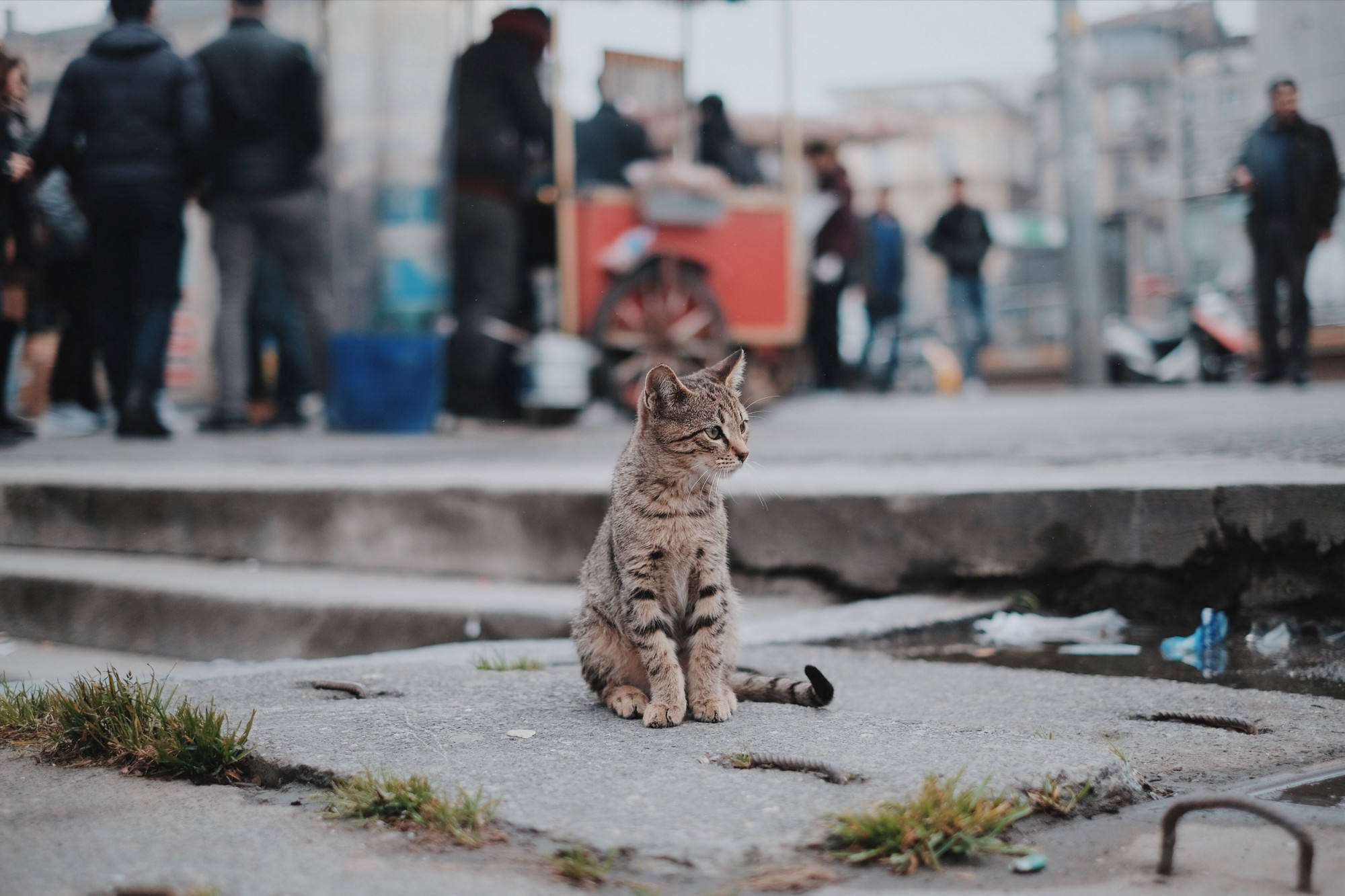 Cat on sidewalk with people behind him.