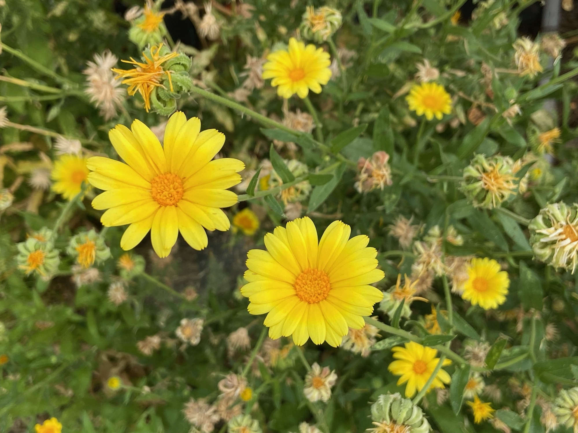 Two bright yellow flowers against a yellow and green background.