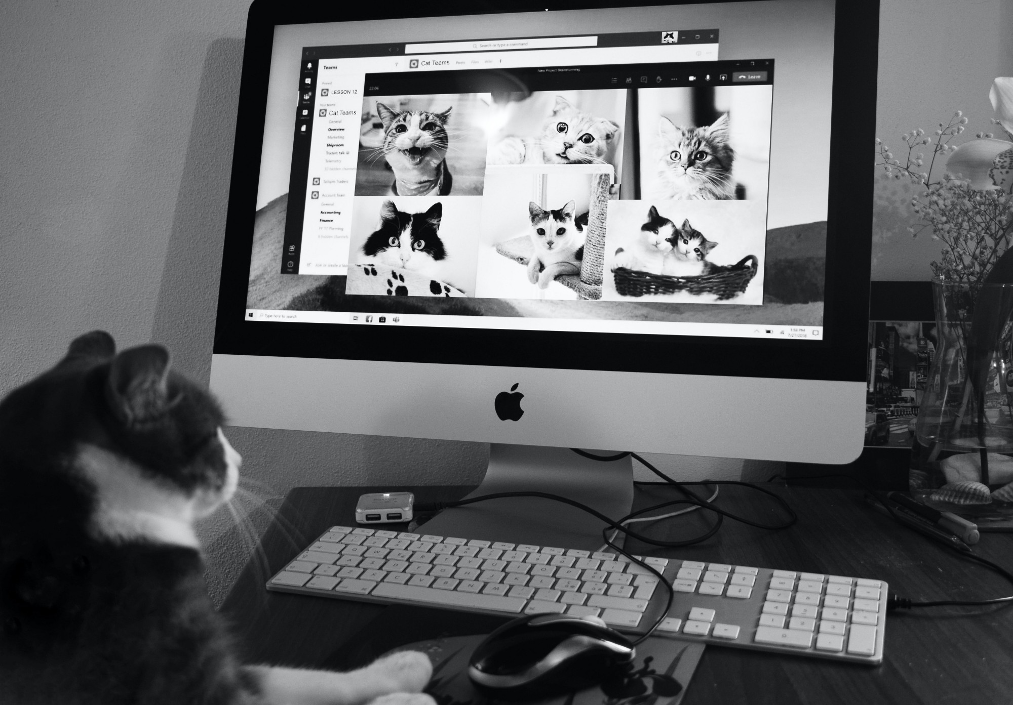 A black and white photo of a tuxedo cat sitting at a desktop computer. The cat appears to be on Zoom with six other cats.
