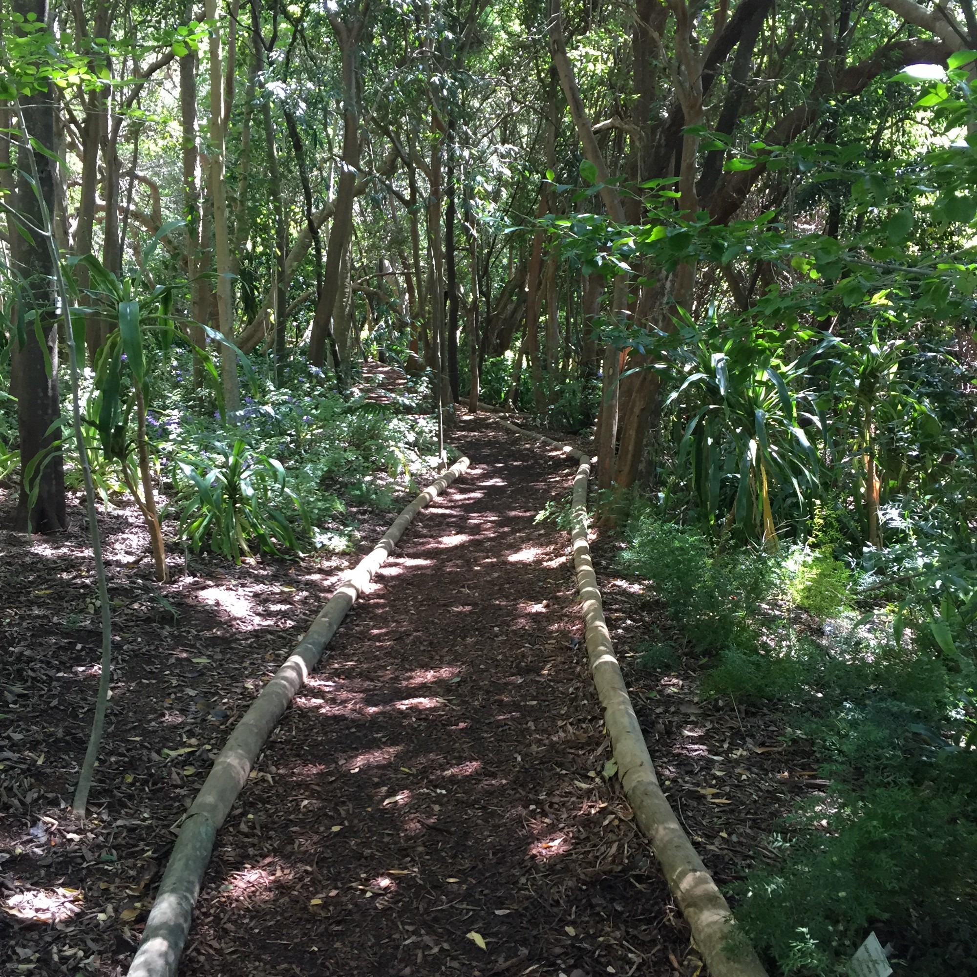 Green and sunny wooded path marked by bamboo sticks and covered with mulch.