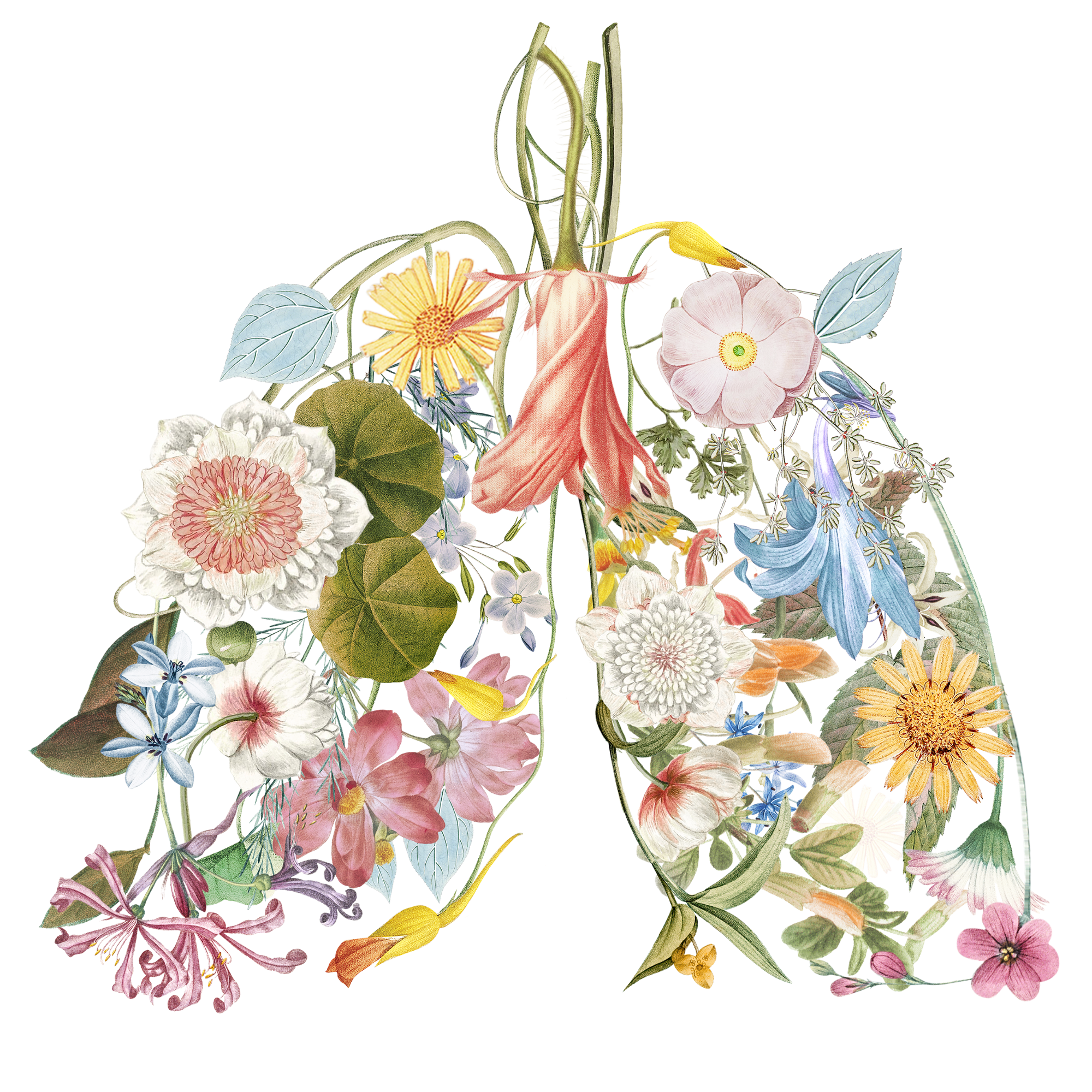 Illustration of many species of flowers arranged on a white background in the shape of human lungs.