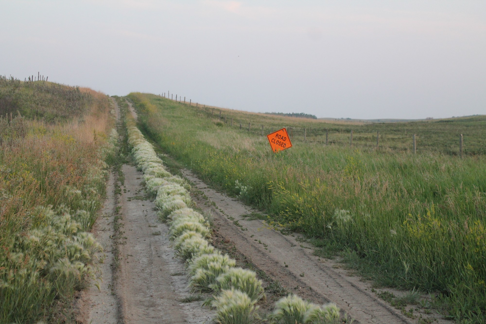 A dirt road in the country. Wild flowers and long grass grow on the outer edges. Tufts of white fox tails grow in the middle. An orange metal sign reads Road Closed.