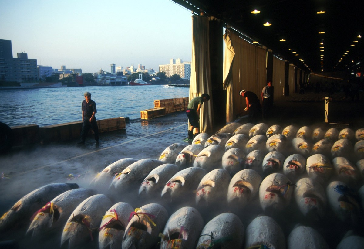 Witnessing The Last Days Of Blue Fin Tuna At The Tokyo