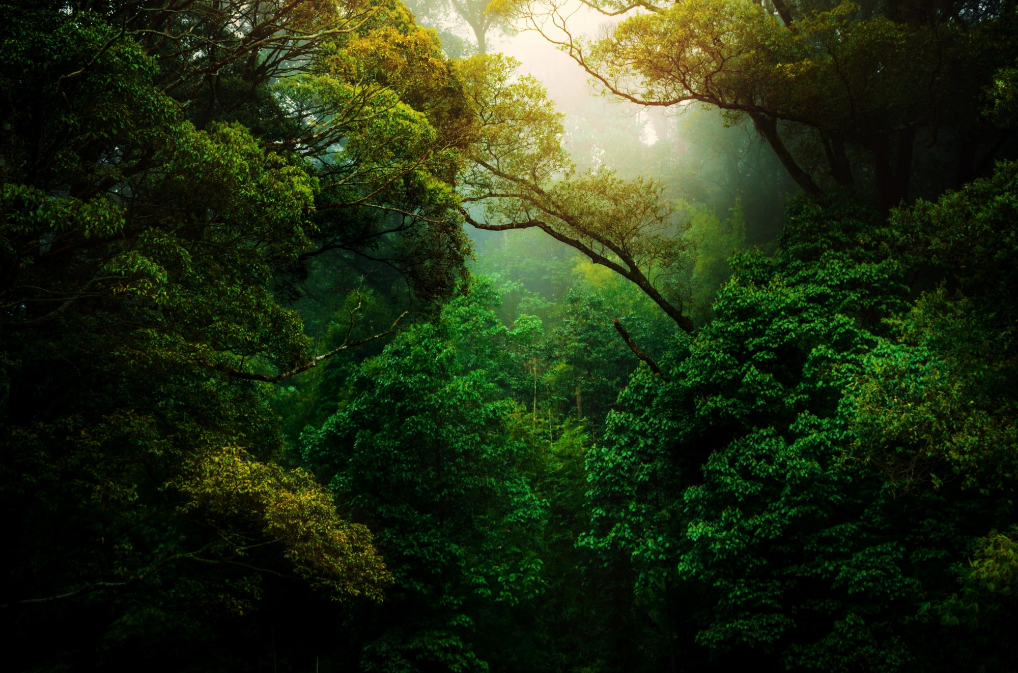 A beautiful picture of sun filtering through dense green forests by Kunal Shinde on Unsplash