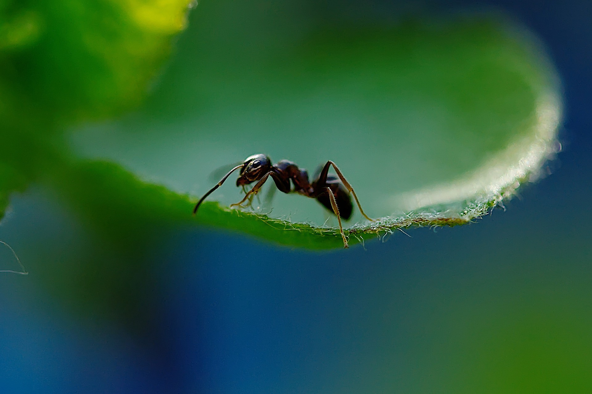 Picture of ant on a leaf