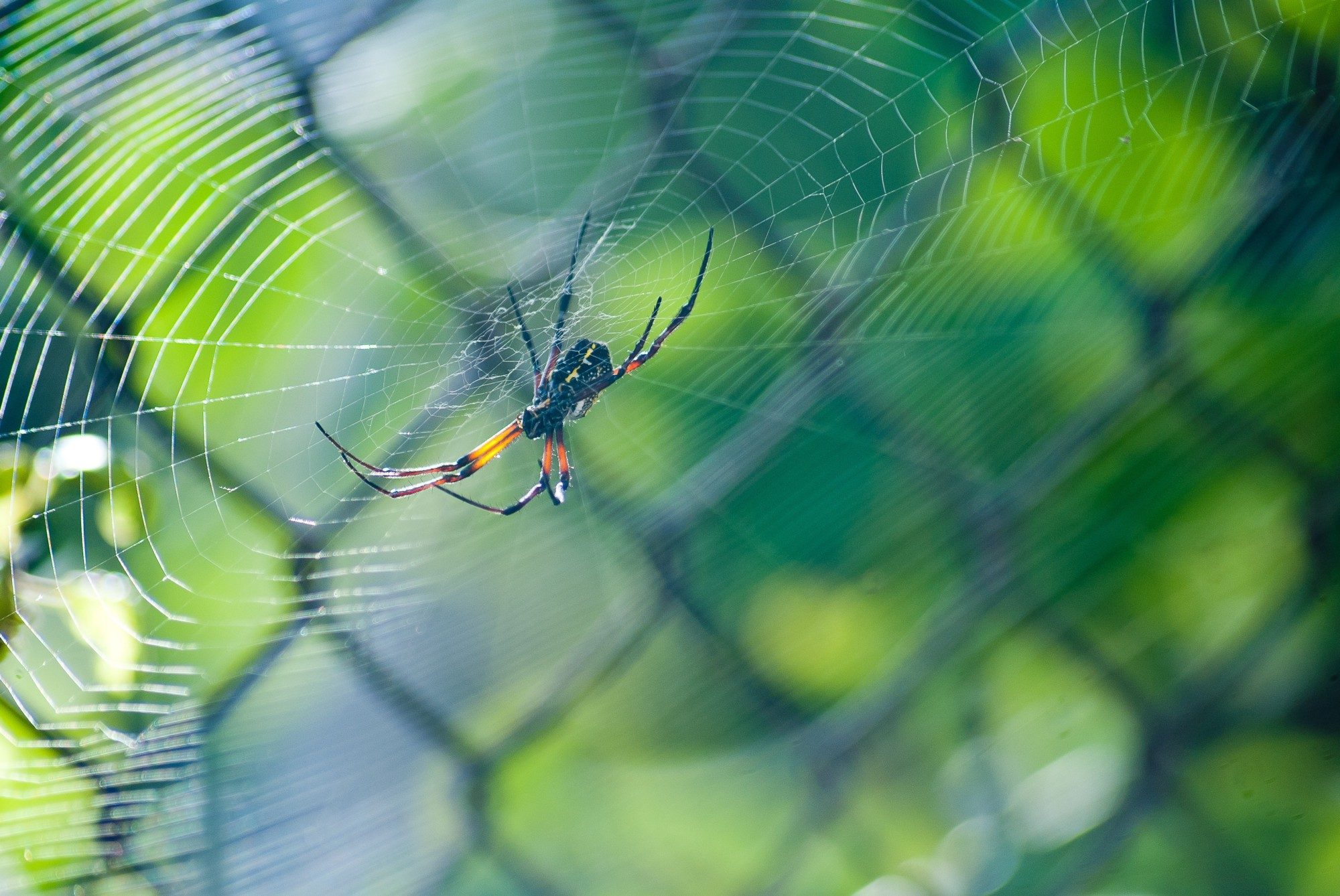 a spider, the symbol of creativity, sitting in the center of a web
