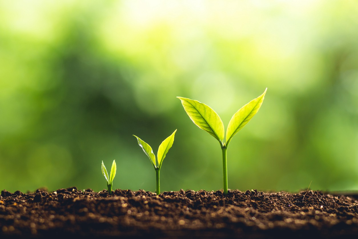 How to invest in green stocks on the stock market, for your investment portfolio. Understand what an ESG portfolio is and how it can benefit the environment, and make an impact on the world and sustainability