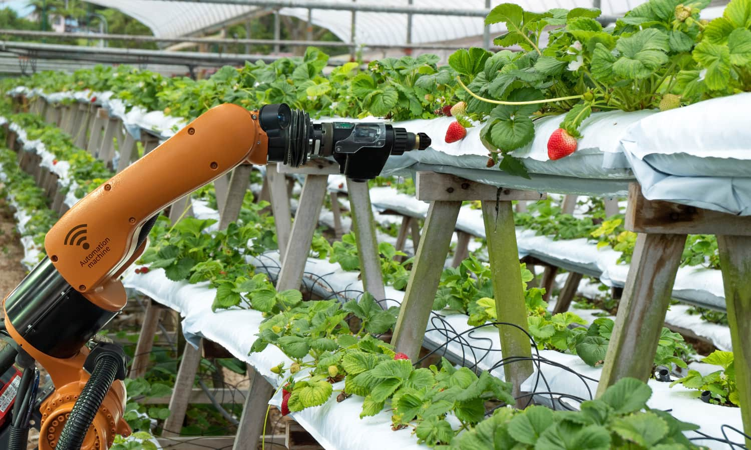 Significance of Training Data in Agricultural Sector
