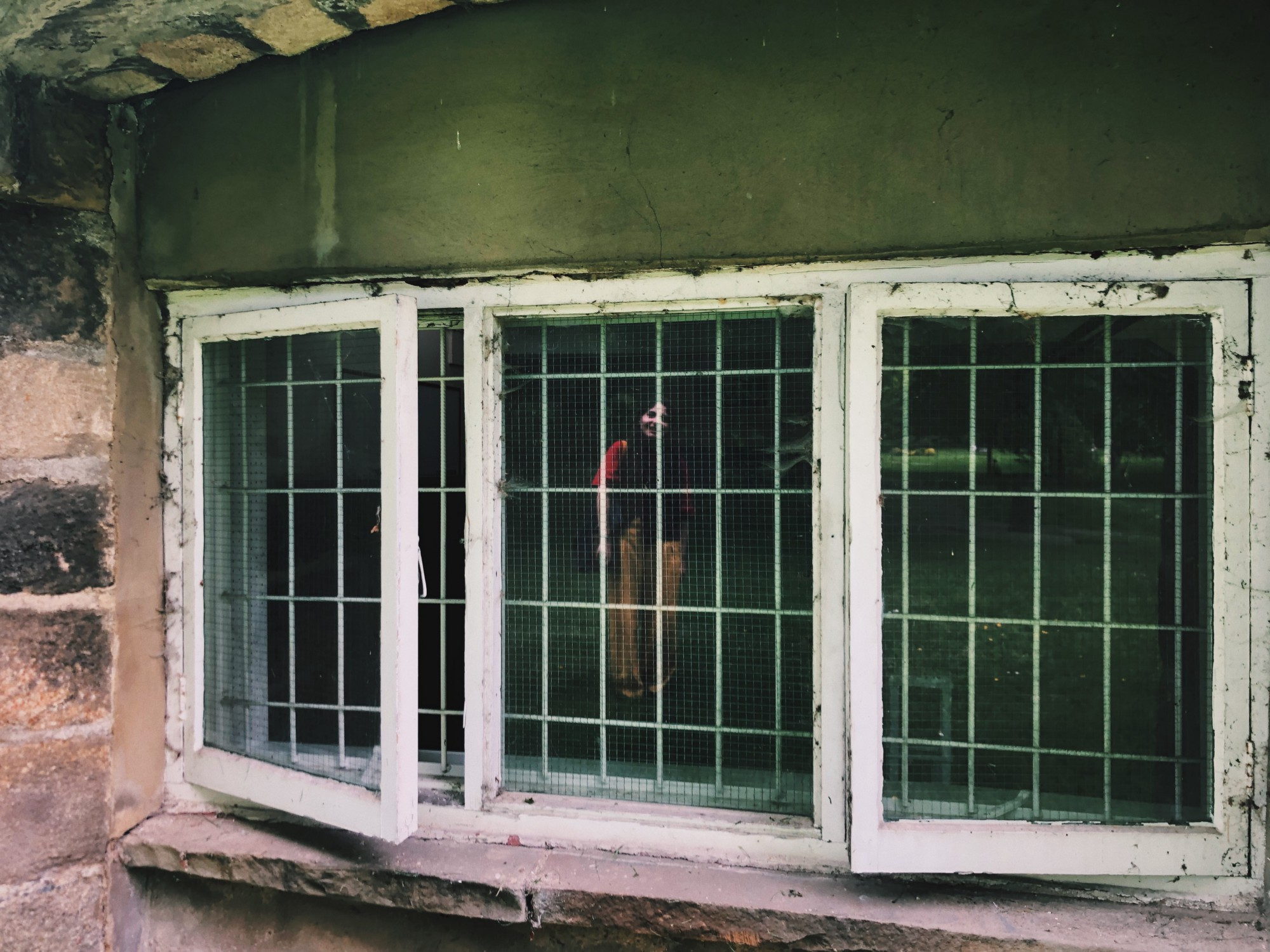 Image of Hayat Sebep reflected in old-fashioned window