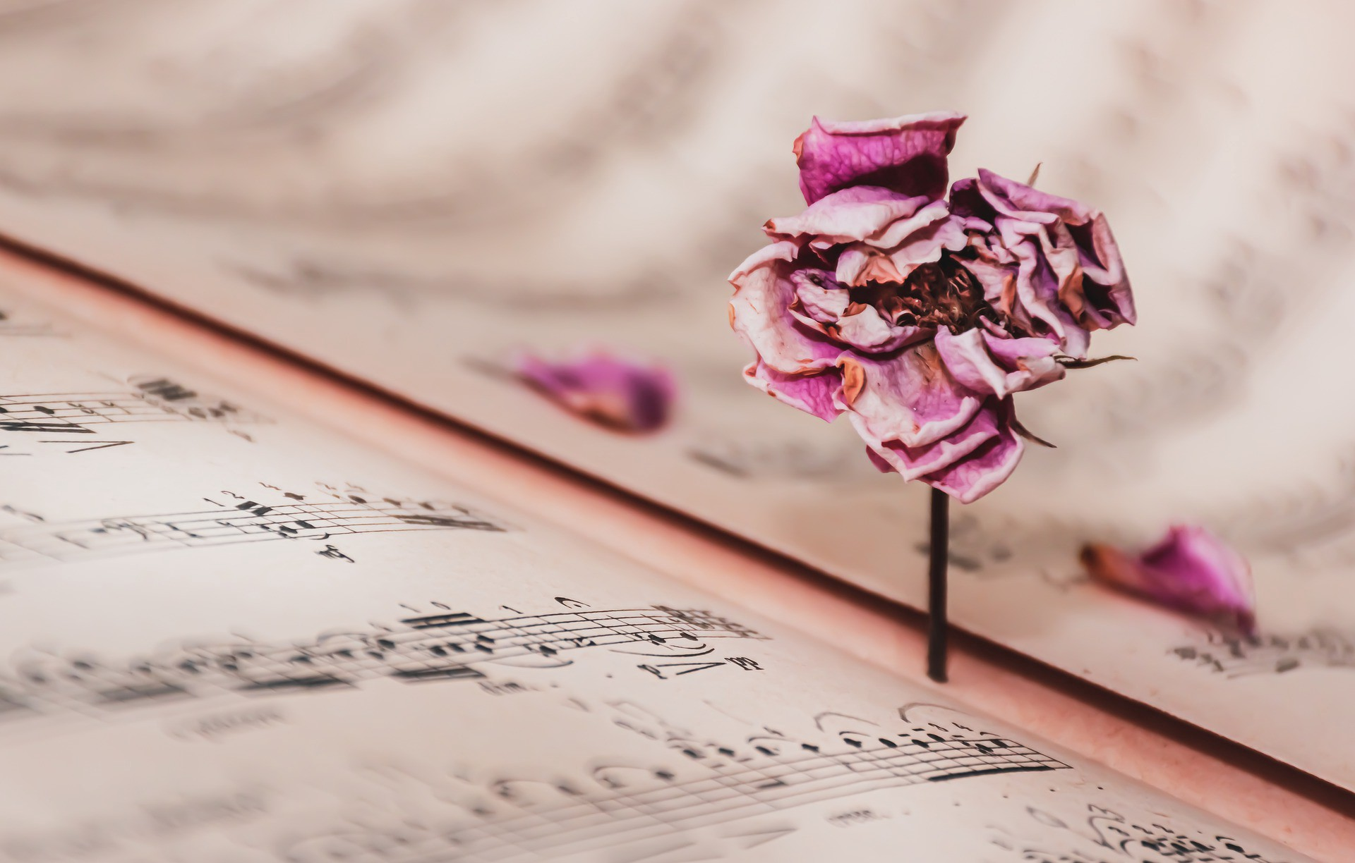 Decaying flower on top of sheet music