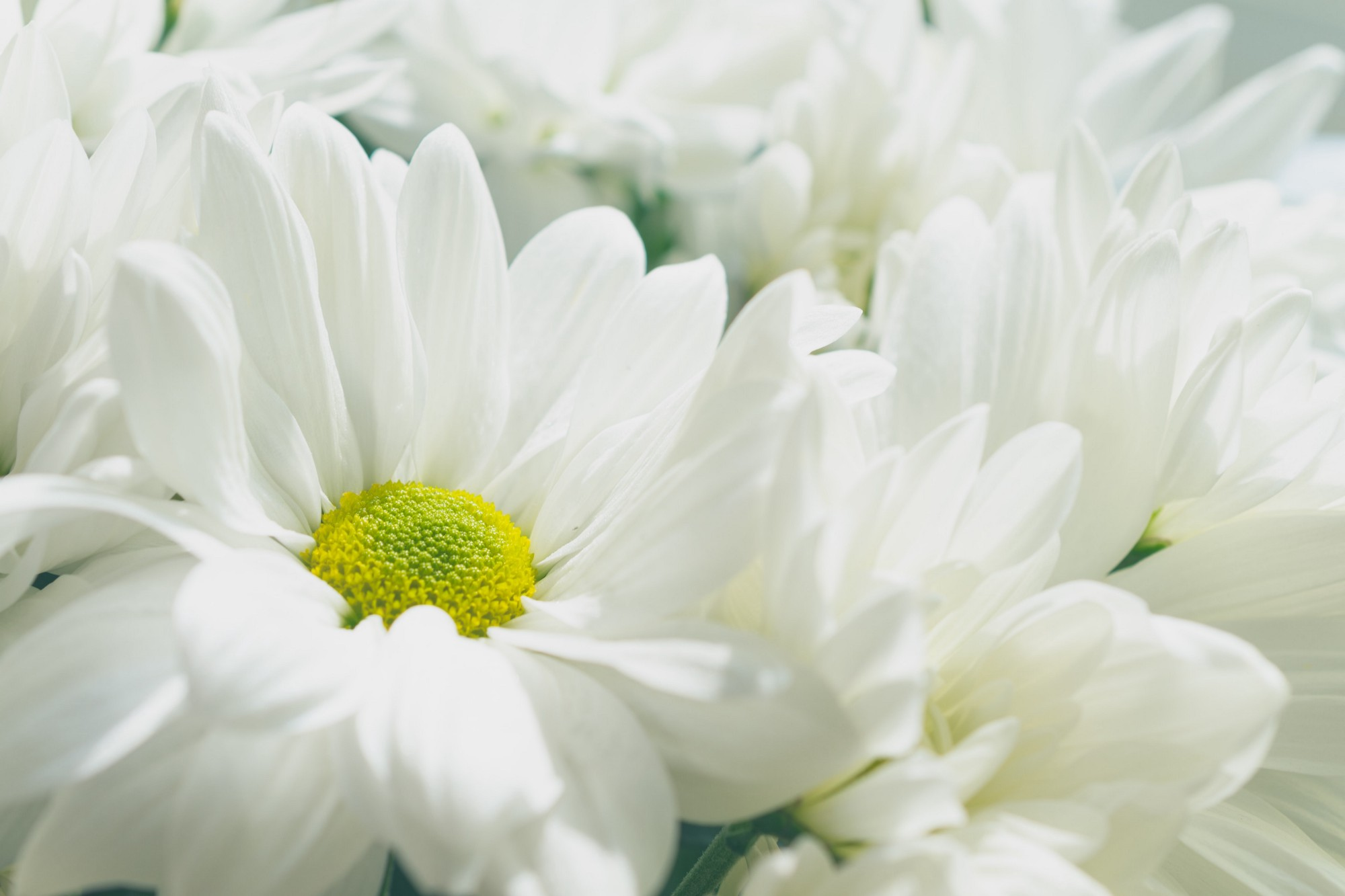 A close-up of white flowers.
