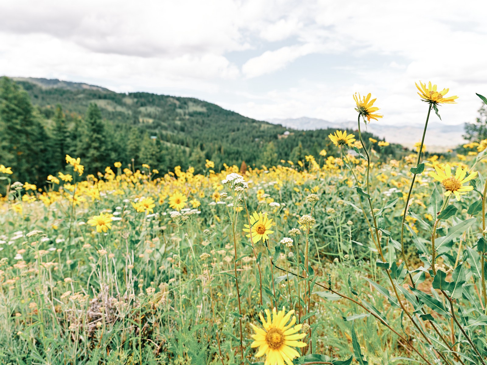 Methow Valley Spring 2020 just as the pandemic gain hold in the Pacific Northwest.
