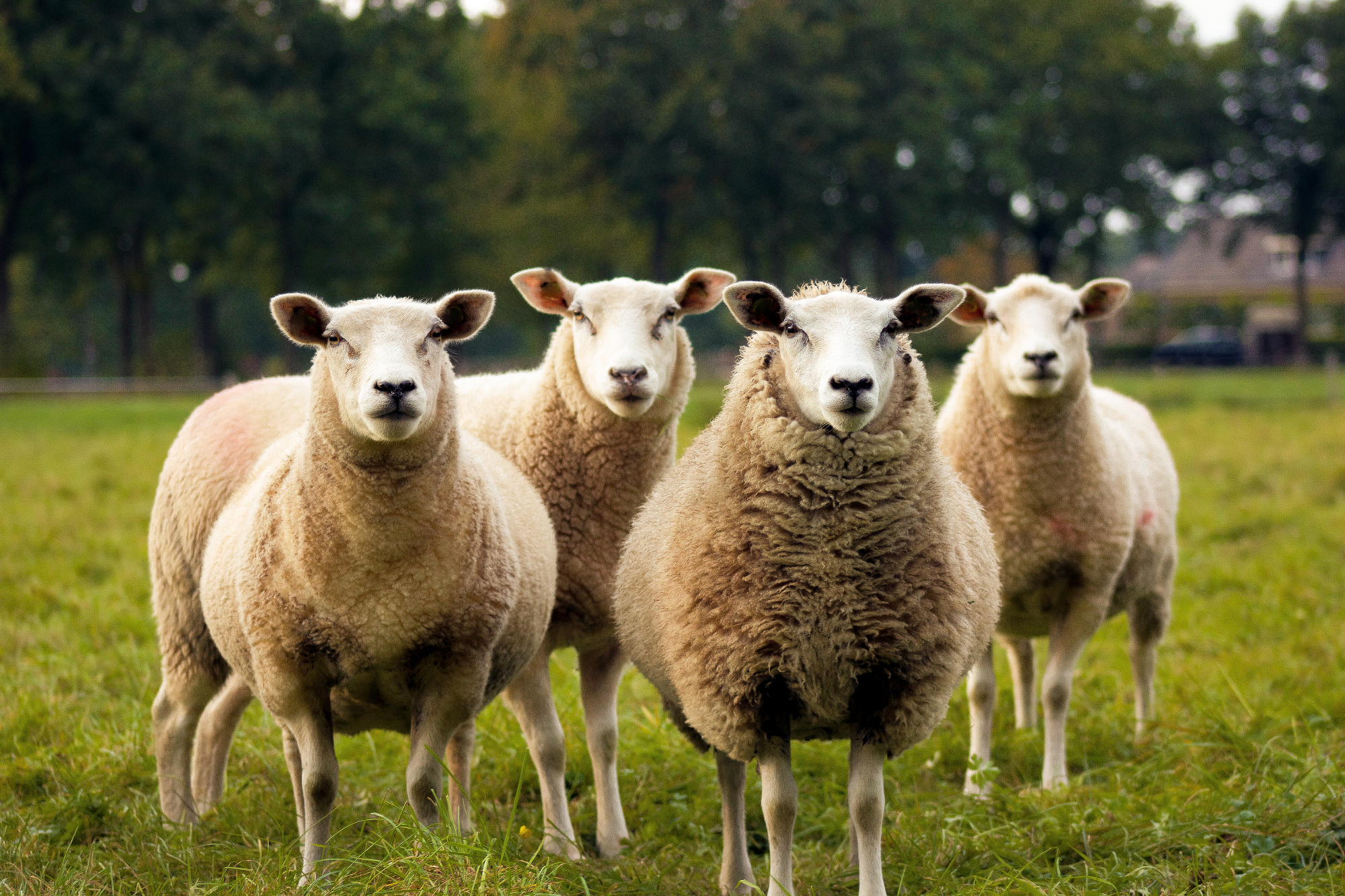 Why Program Increment Planning is like a wolf in sheep's clothing