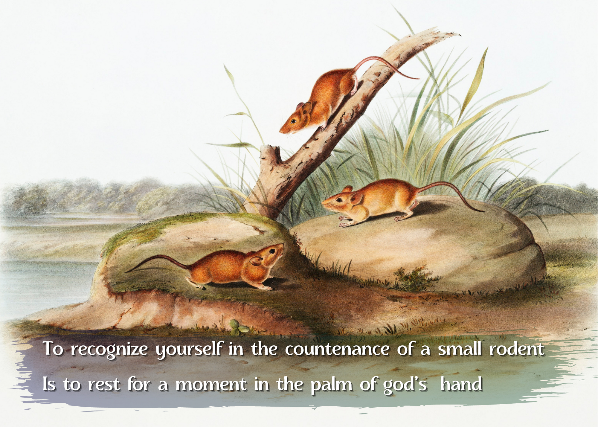 A classic, richly colored illustration of mice surrounding a small branch next to a lake with the text of the aphorism below.