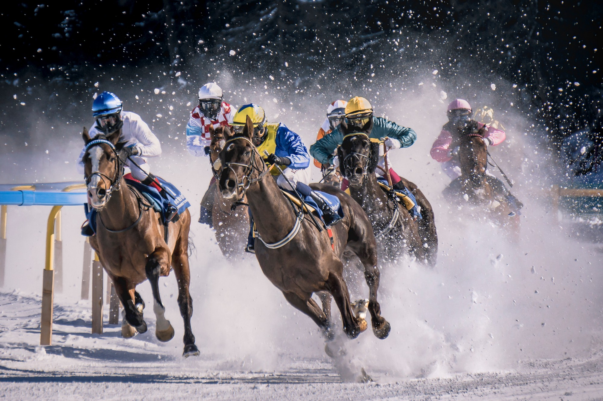 Horse racers coming around a bend, with snow flying up from the horses' hooves.