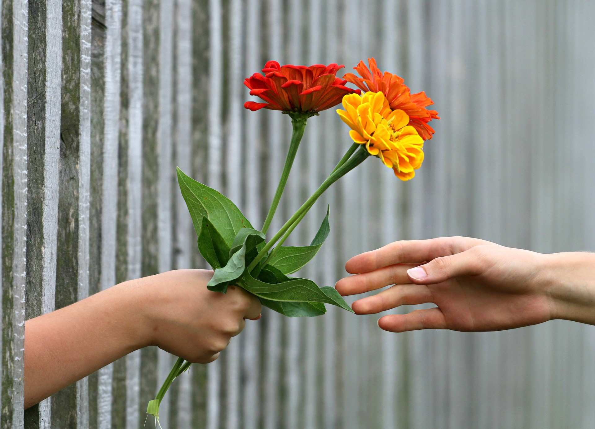 Hand reaching through a corrugated steel fence handing a small bouquet of flowers to another hand.