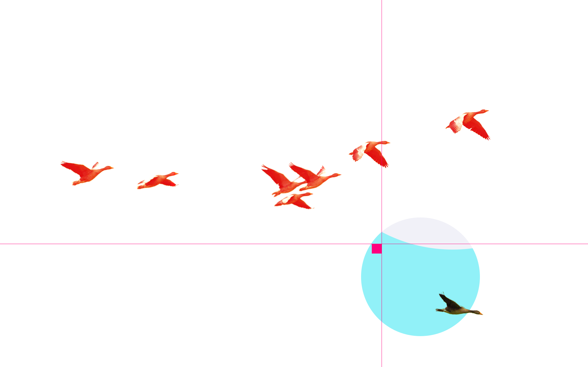 A semi-abstract image of geese flying, with one going off in a different dirction