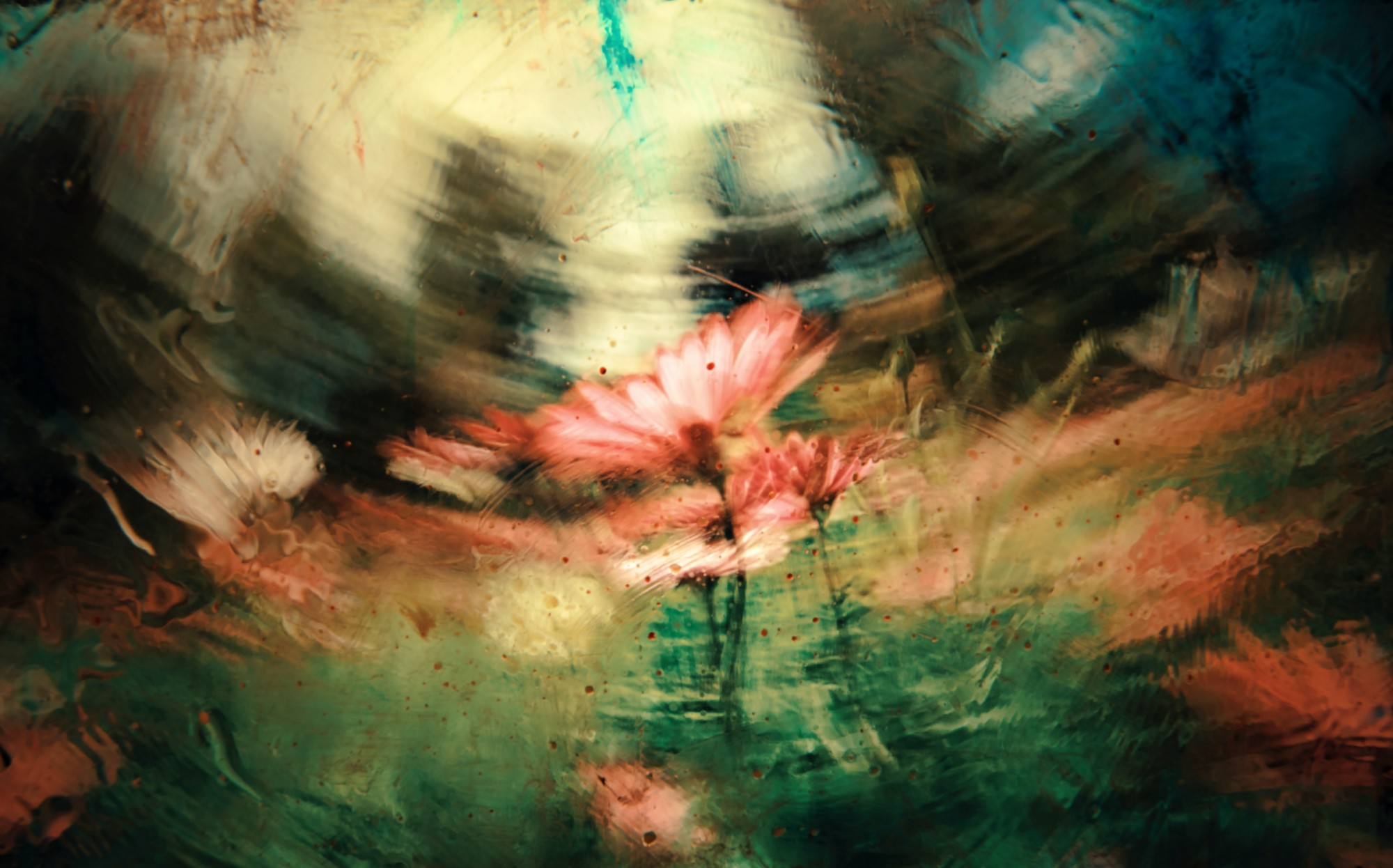 Photo of pink and white daisies under swirling, bottleglass blurred effect.