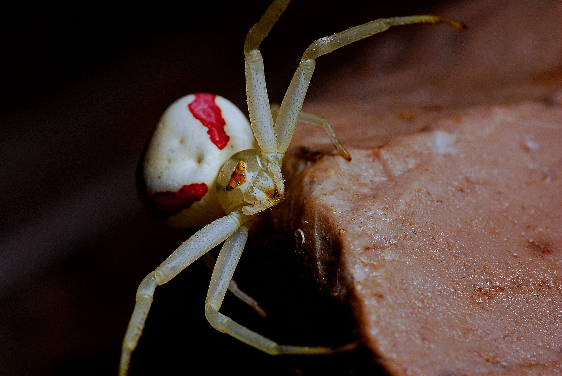 Spider: Lovely Legs and All