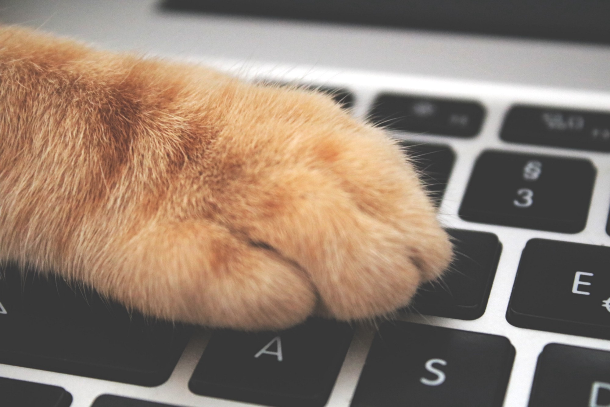 Cat typing on a keyboard.