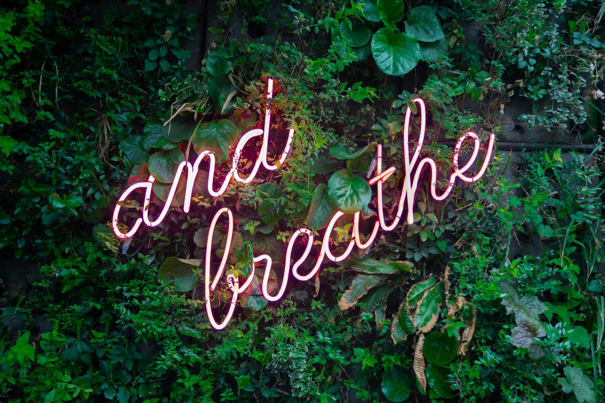 "green plant wall with neon pink sign that reads, ""and breathe"""
