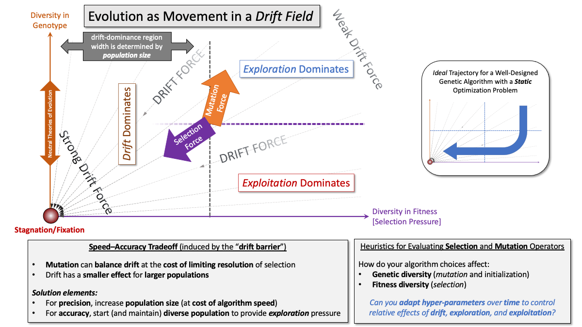 Diagram bringing together genotypic diversity, phenotypic diversity, drift, mutation, and natural selection