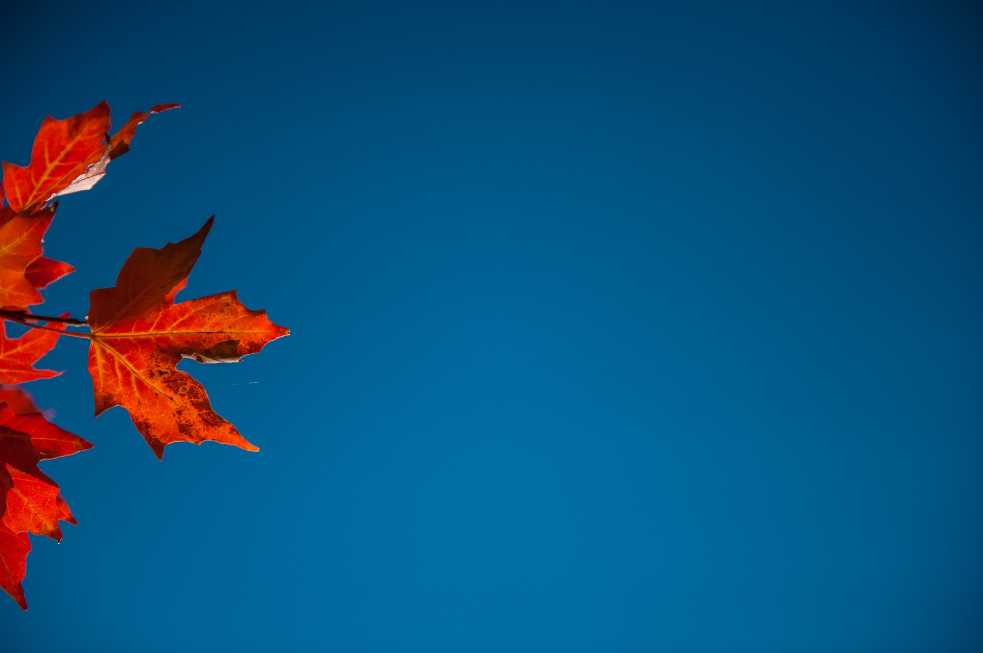 Deep, blue sky with red maple leaves peeking on one edge.