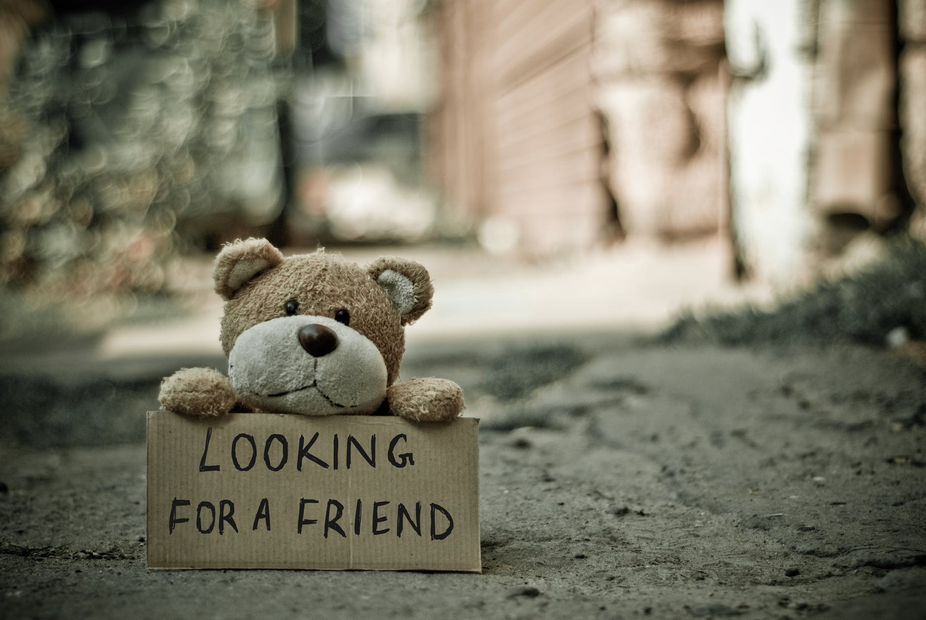 """A cute teddy bear holding a sign that says: """"Looking for a friend."""""""