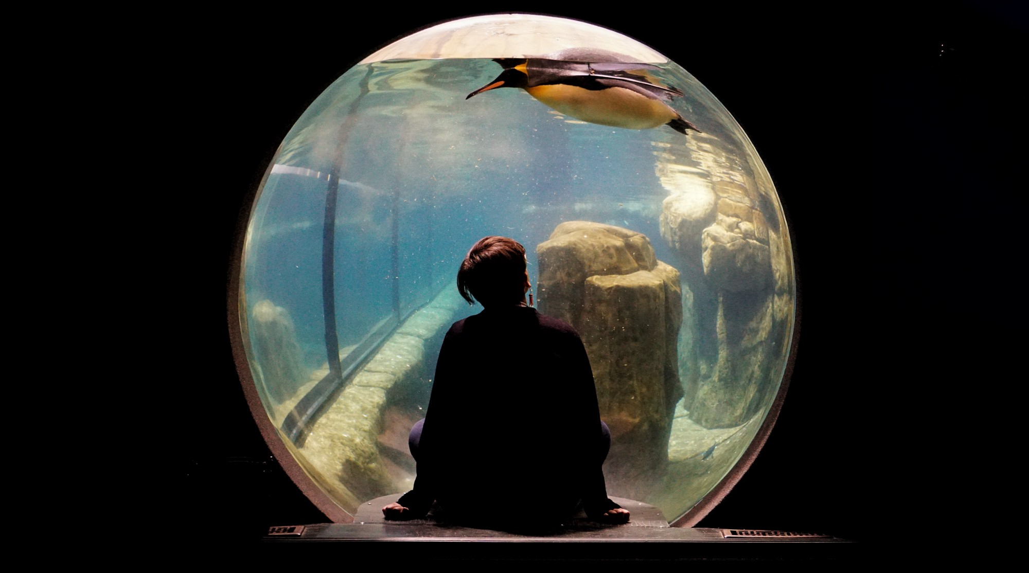 A lady sitting in a bubble looking at a Penguin swimming in water