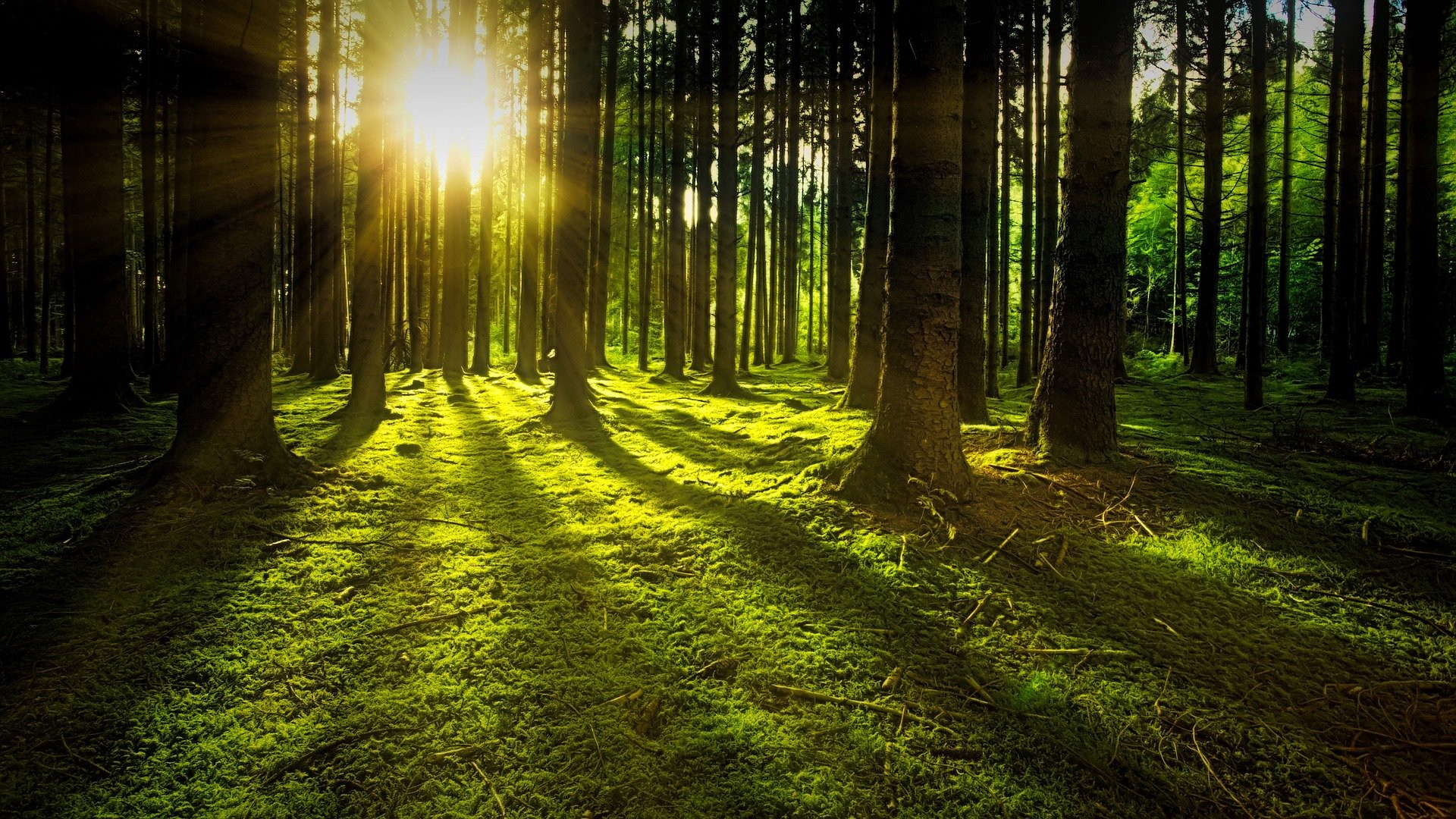 Sun appearing through a forest of tress symbolizing a great and postive change in your life.