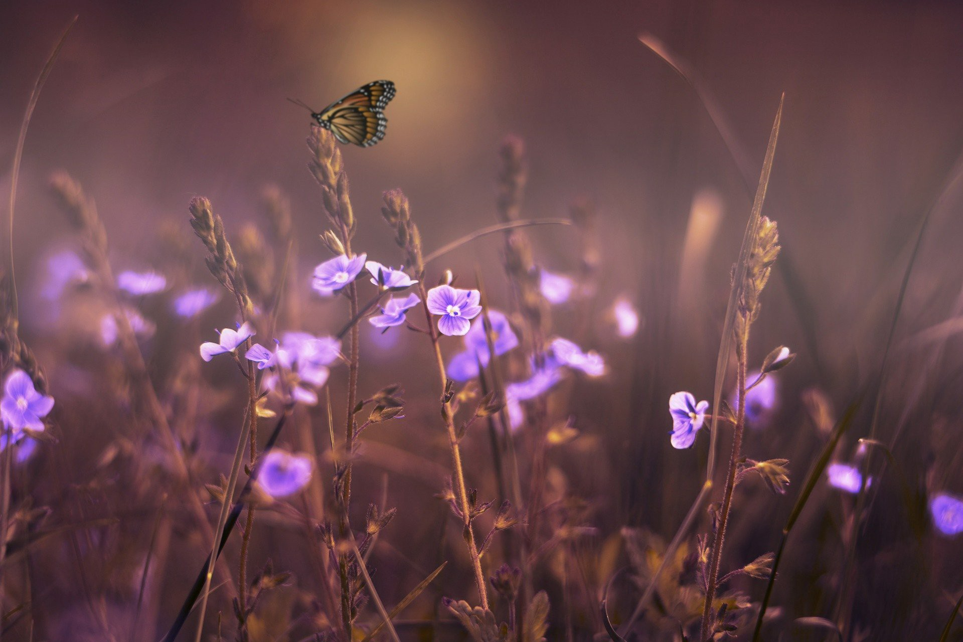 Butterfly and lilac flowers