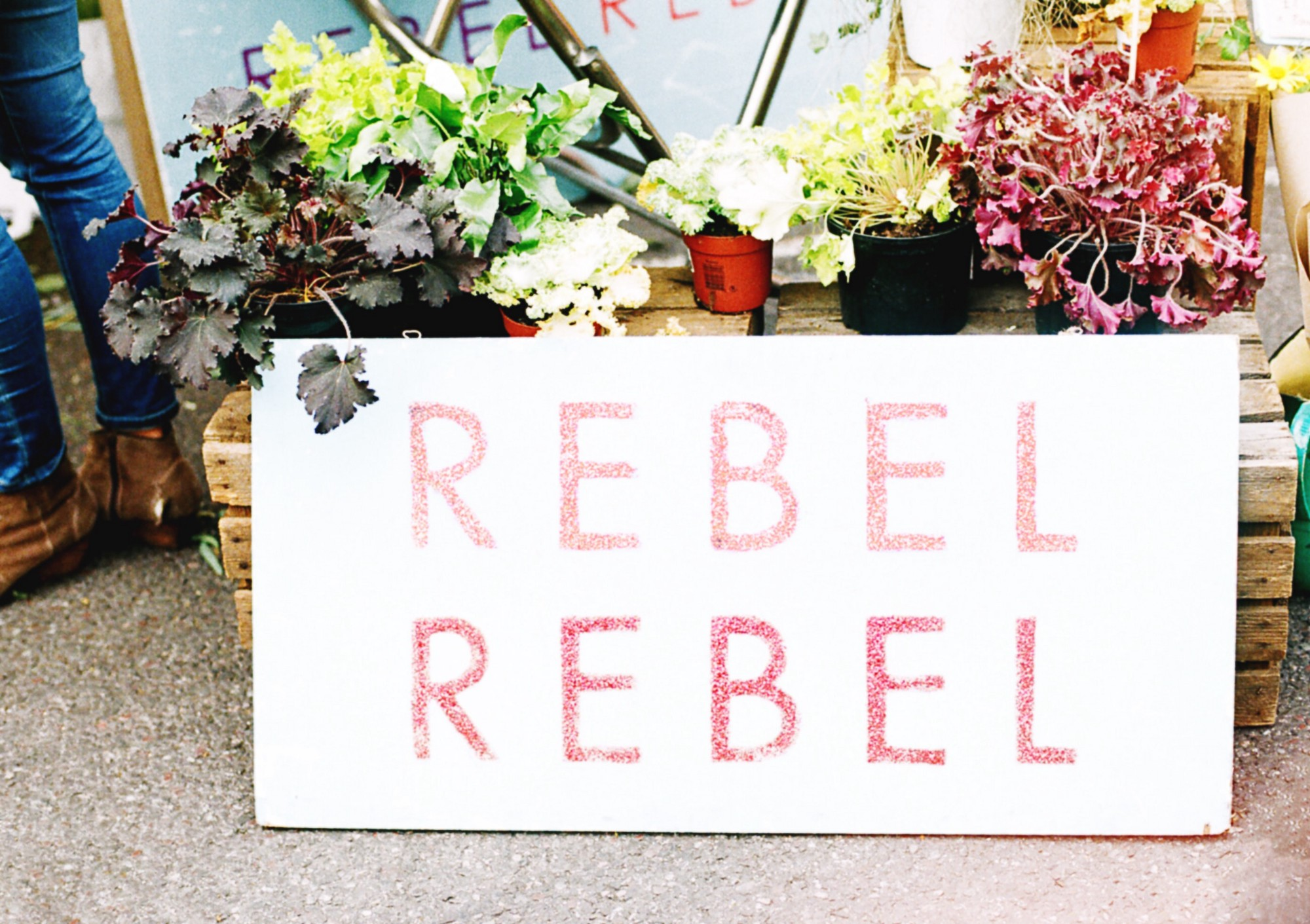 """Sign that says, """"Rebel, Rebel"""" in front of flowers."""
