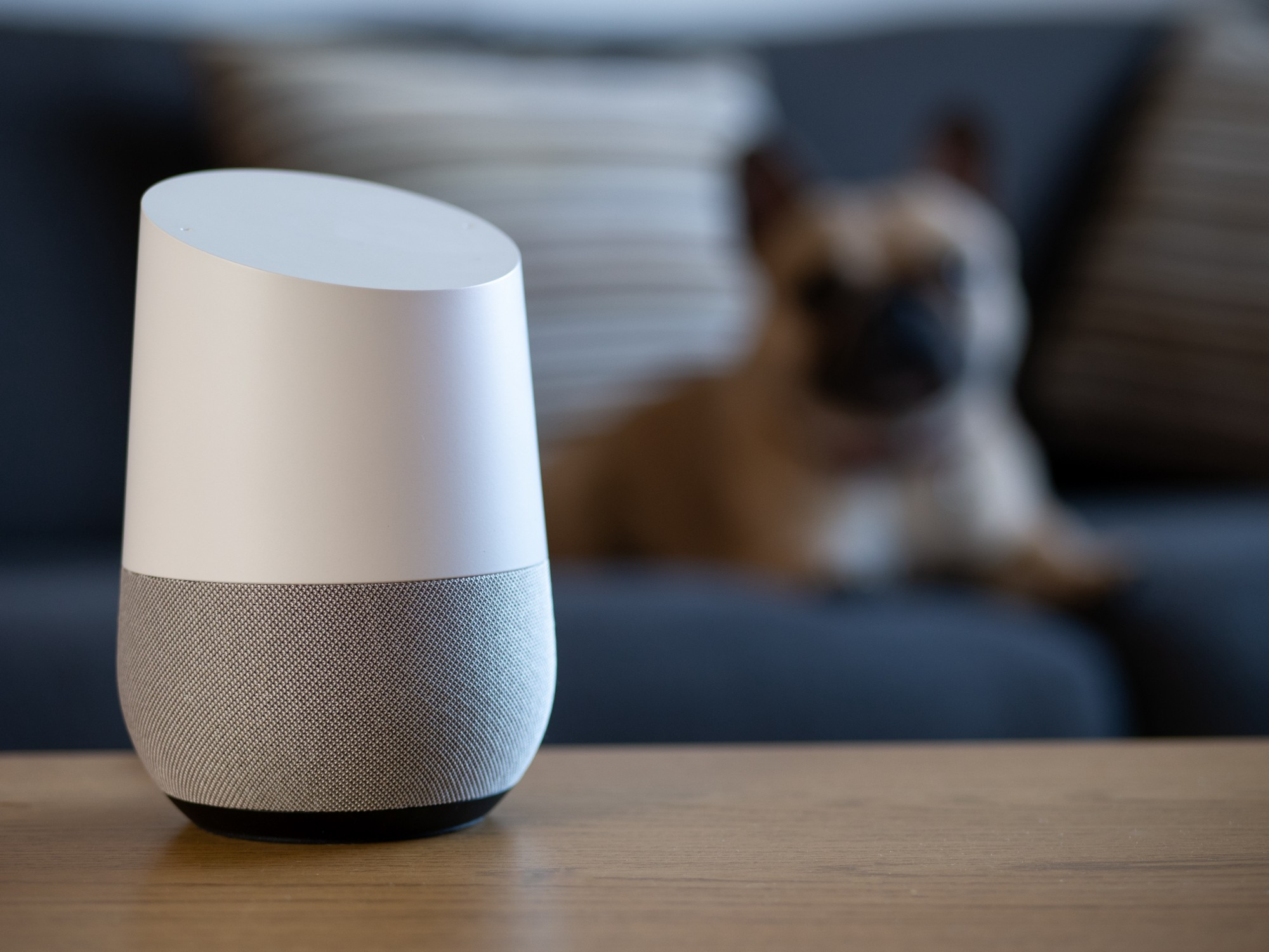 Smart speaker sits on a coffee table while a dog stares at it from the couch in the background.