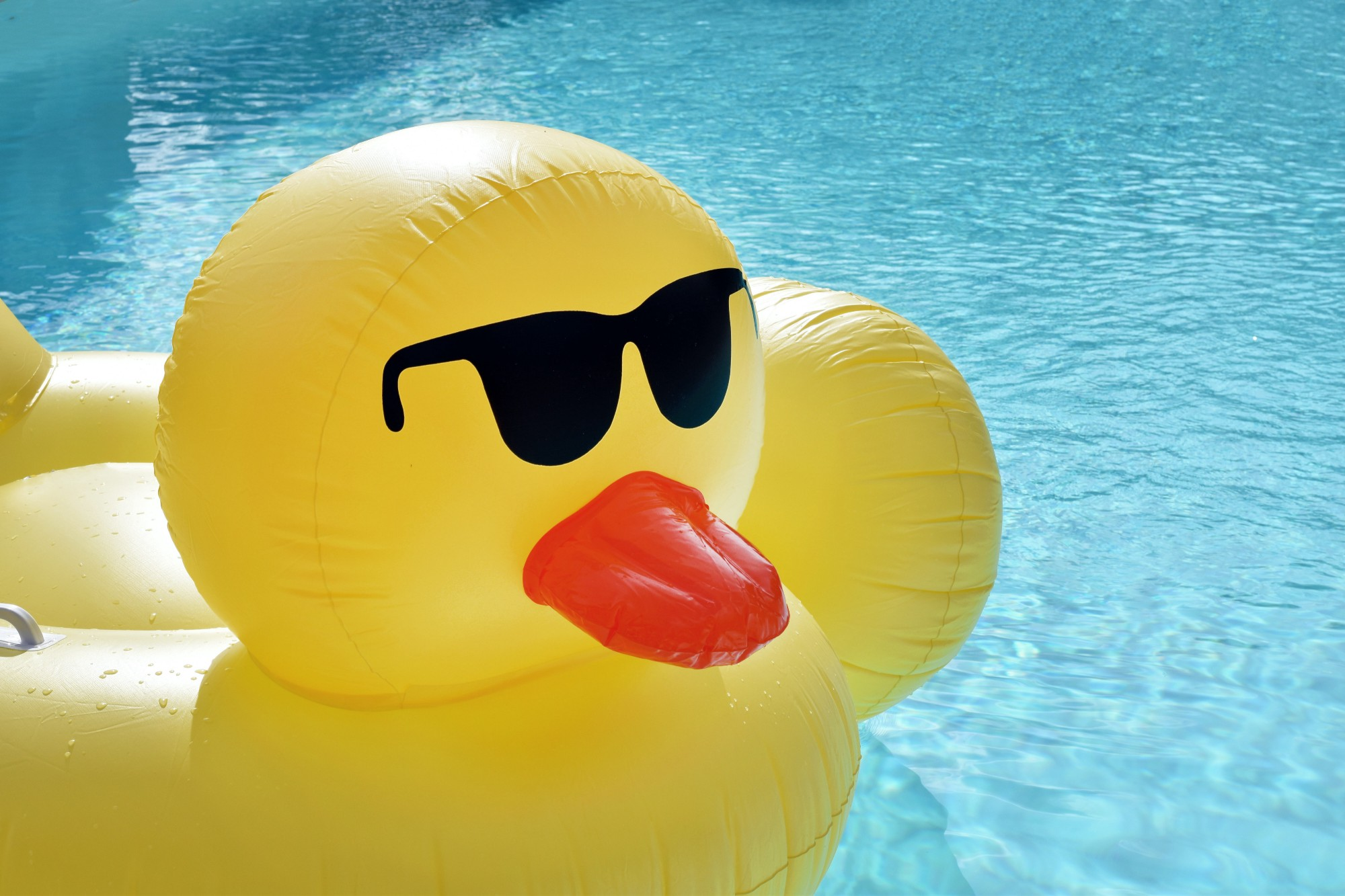 Large, yellow duck-shaped inflatable with red beak and black sunglasses sitting in a swimming pool.
