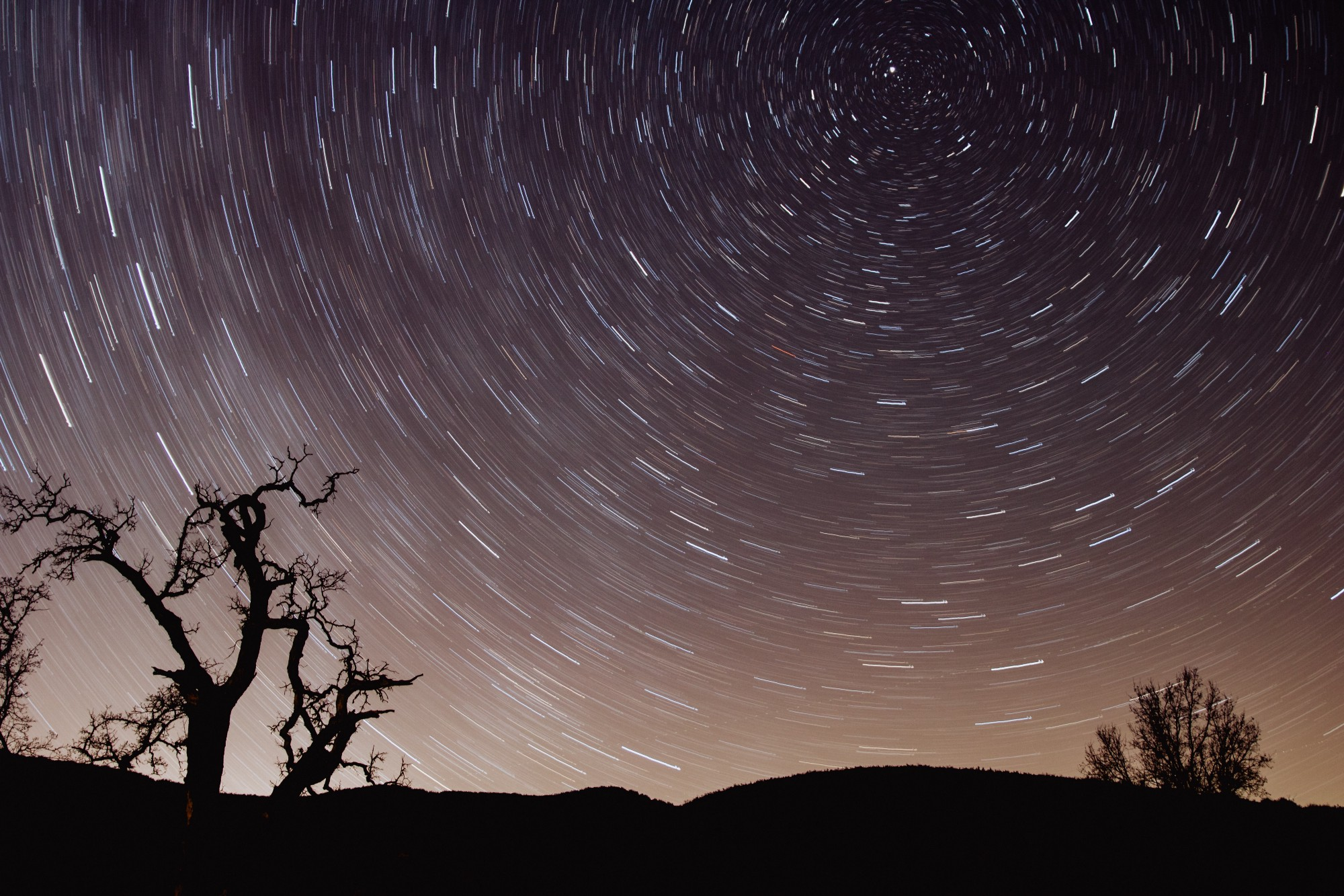 spinning rings of stars in a night sky, dark trees in the foreground