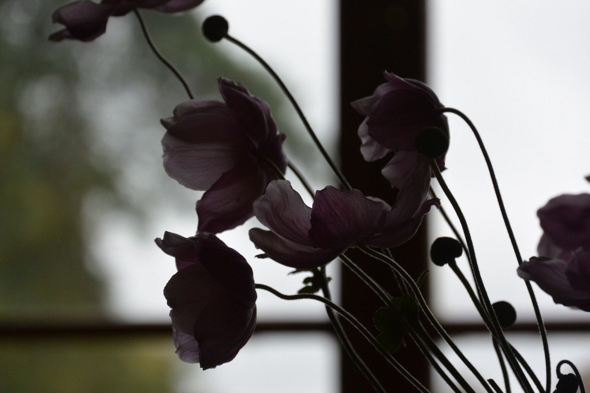 Pinkish flowers on thin stems in front of a window. Image mood is dark and moody.